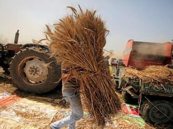 هل ينفد مخزون مصر من القمح بعد فشل 3 مناقصات؟