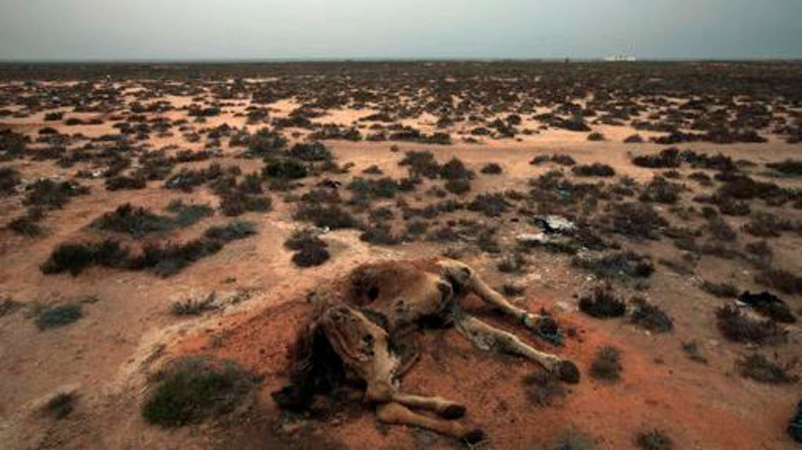 This Saturday, March 12, 2011 picture shows a dead camel in the desert outside the southeastern village of Ben Guerdane, Tunisia, close to the border with Libya. AP