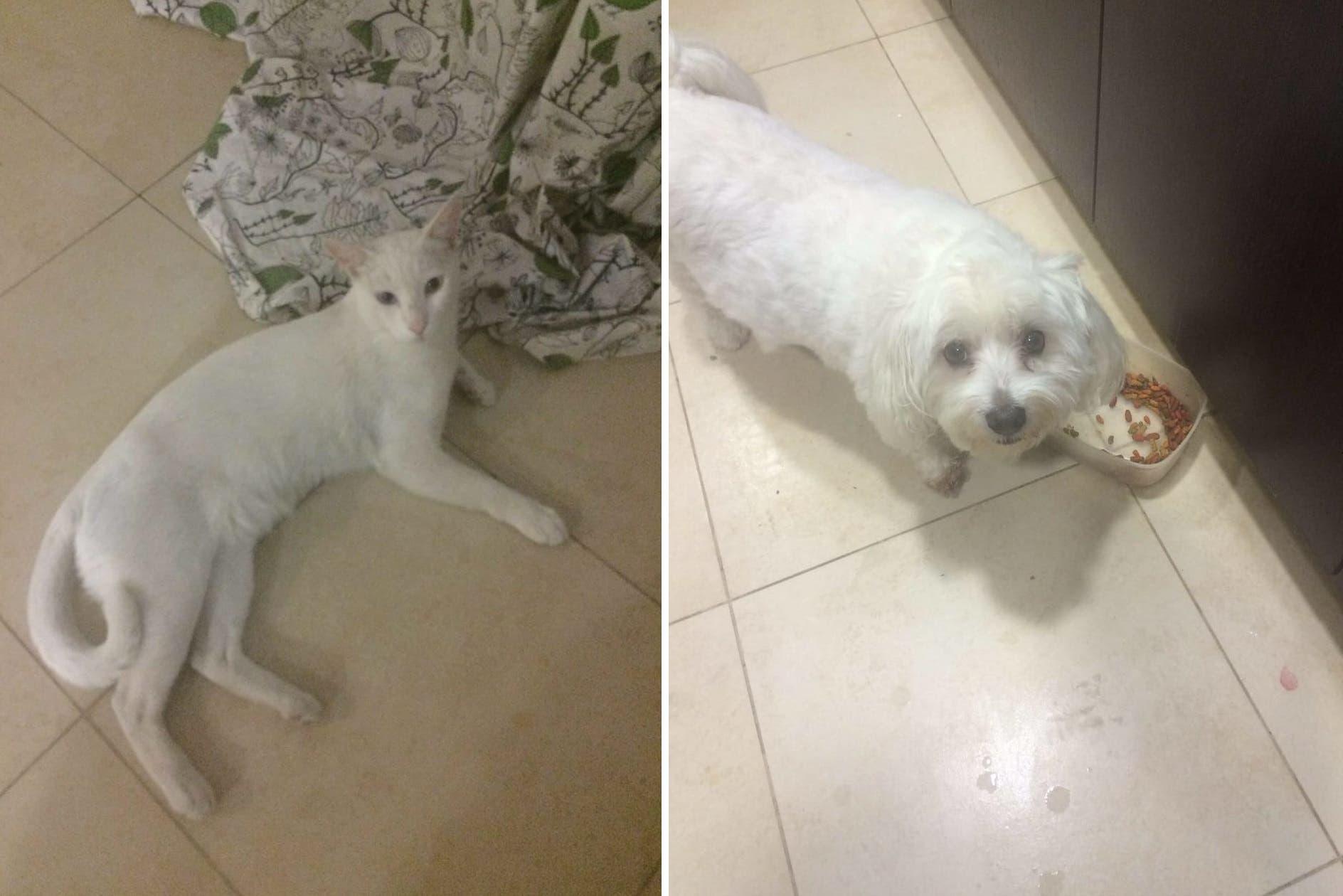 The tragic reality of abandoned pets in the UAE - Al Arabiya
