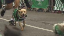 پیرو:کتے مالکوں کے شانہ بہ شانہ دوڑ کے مقابلوں میں شریک