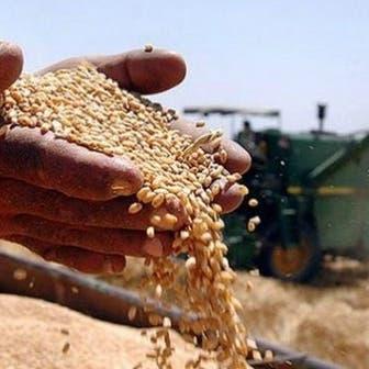 مصر تتطلع لزراعة 3.5 مليون فدان قمح في 2021-2022