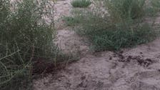 سفاک سعودی عورت نے چھ سالہ سوتیلی بیٹی ذبح کرڈالی