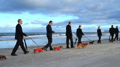 """مسيرة """"فنية"""" على الشاطئ بصحبة الكلاب.. فما قصتها؟!"""