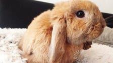 تعرف على أرنب اجتذب 110 آلاف متابع بمواقع التواصل
