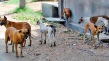 کتے کے کاٹے کے 7000 واقعات ۔۔۔ شامی حکومت میں افراتفری