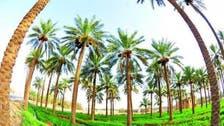 UN: Saudi's Al-Ahsa the most creative city in the world