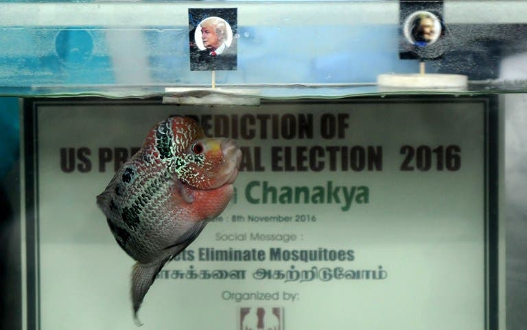 Indian organisers watch as fish named Chanakya swims to a portrait of US presidential candidate Donald Trump, (L), floating alongside a portrait of US presidential candidate Hillary Clinton in a fish tank, during an event in Chennai on November 8, 2016. (AFP)