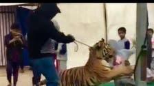 شاهد صورة الطفلة التي هجم عليها النمر.. وهذا ما حدث لها