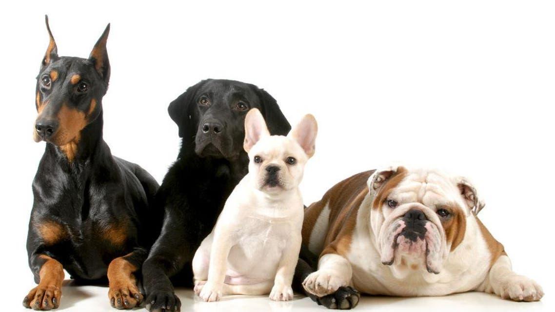 الكلاب