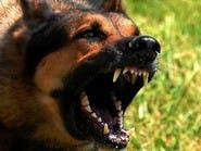 كلاب مسعورة تهاجم طفلة.. وتتركها جسداً مدمماً
