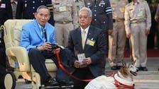 بالصور شاهد سر علاقة زعماء تايلاند الغامضة بالكلاب