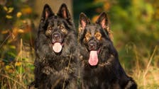 Egyptian man goes into seizure, attacked and killed by his dogs