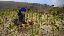 Syria's irrigated farmland 'drops by half during war'
