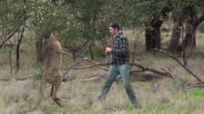 Man who punched kangaroo faces online backlash
