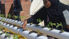 Egyptians using new technique to grow crops on rooftops