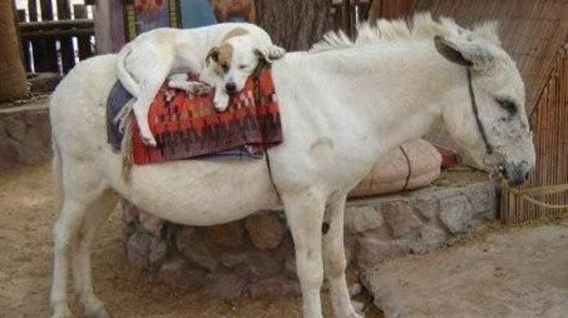 كلب وحمار
