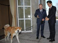 """روسيا ترفض """"كلباً"""" اعتزمت اليابان إهداءه لبوتين"""