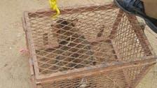 Saudi tweeps hail Civil Defense cat rescue operation