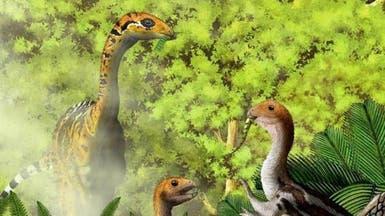 """ديناصور """"وديع"""" ولد بأسنان وفقدها بمرحلة البلوغ"""