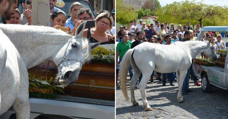 مؤثرة لحصان يبكي وفاة صاحبه 4f8aed41-7d7c-4d1b-ba4a-6890dc088b3e.jpg