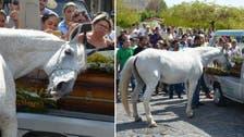 صور مؤثرة لحصان يبكي وفاة صاحبه ويُشيعه إلى القبر