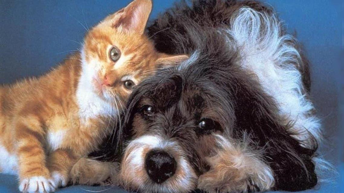 كلاب قطط