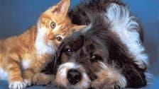 بلد يدرس قانونا يحدد من يحق له حضانة الحيوان بعد الطلاق!