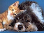 إذا كنت تربي كلبا أو قطا في منزلك.. فاقرأ هذا الخبر