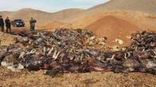 بالصور.. سر العثور على 250 حماراً ميتاً في سوهاج بمصر