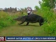 شاهد.. أضخم تمساح على وجه الأرض