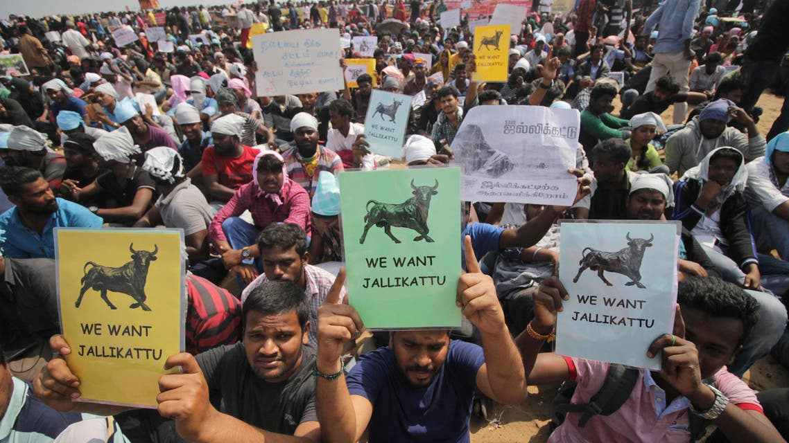 Protestors hold placards demanding Jallikattu, a traditional bull-taming sport banned by India's top court, be allowed to resume unhindered as thousands gather at the Marina beach in Chennai, India, Sunday, Jan.22, 2017. (AP)