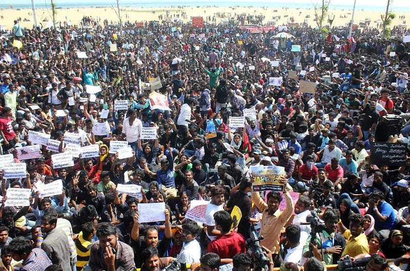 Protestors gather at Marina beach demanding a ban be lifted on the traditional sport of bull-taming, or Jallikattu, in Chennai, India, Wednesday, Jan. 18, 2017. (AP)