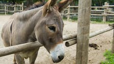 From donkeys to dried scorpions, the tale of Chinese imports from Africa