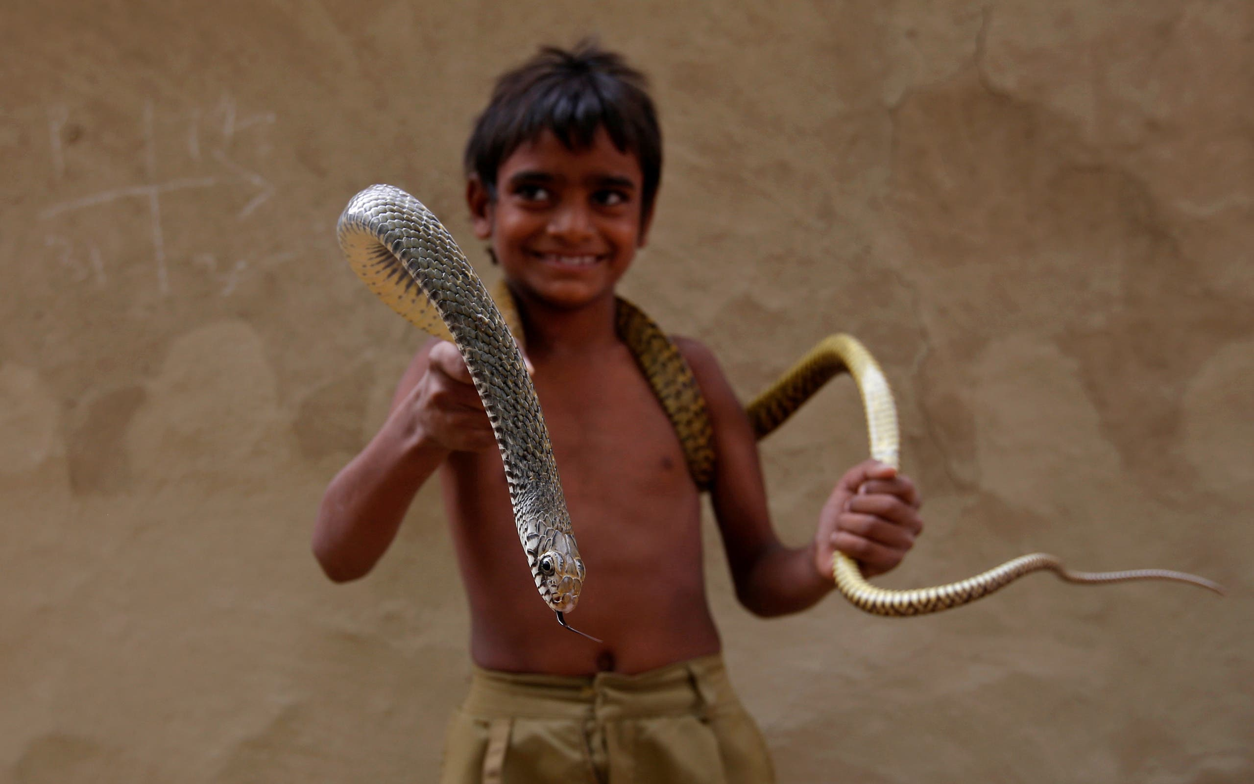 Binu Nath poses for a photograph with a snake in Jogi Dera (snake charmers settlement), in the village of Baghpur, in the central state of Uttar Pradesh, India. REUTERS