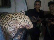 السجن عامين لصاحب النمر الذي التهم طفلة في مصر