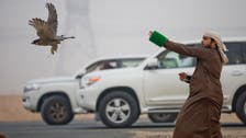 PHOTOS: What football is to Brazilians, falconry is to the Gulf