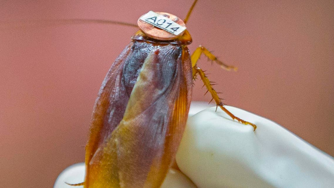 Cockroach (Reuters)