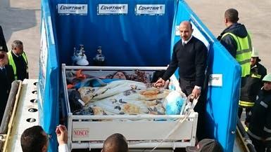 بالصور.. هكذا نقلوا فتاة مصرية تزن نصف طن للهند