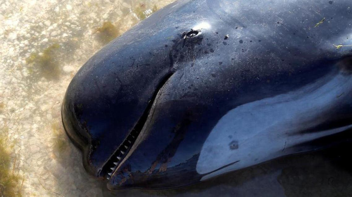 New Zealanders race to rescue stranded whales reuters