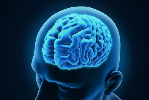 المخ البشري