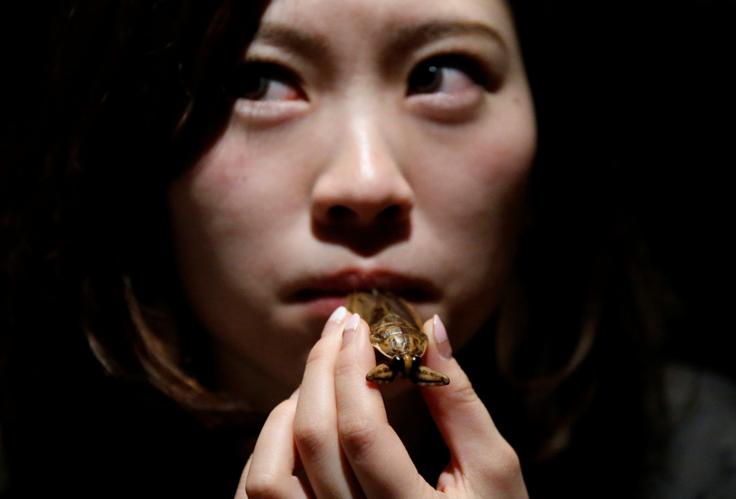 A woman tries to eat a water bug at a bar in downtown Tokyo, Japan, February 12, 2017. Picture taken February 12, 2017. REUTERS/Toru Hanai