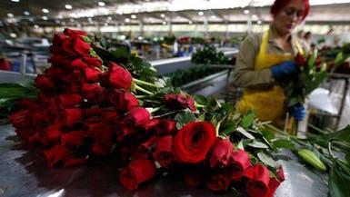 """""""عيد الحب"""" يرفع الشراء على الورود بـ146% في الإمارات"""