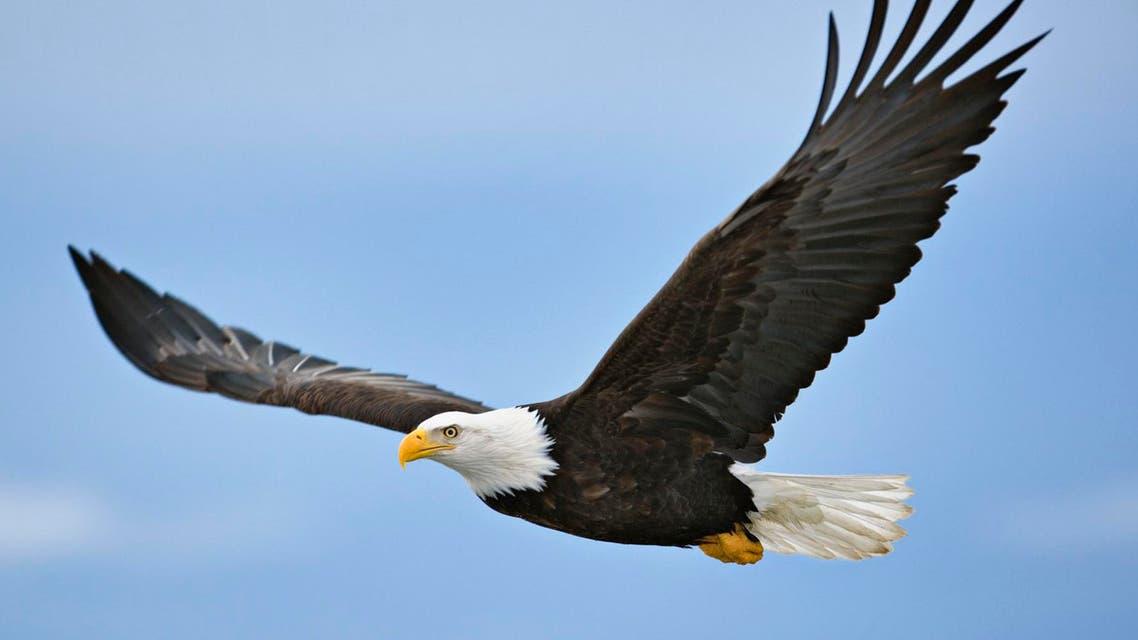 طائر - نسر - تعبيرية
