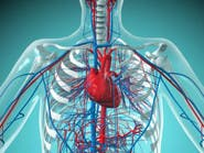 بعد صيام شهر رمضان.. جسمك يمتلك أوعية دموية جديدة