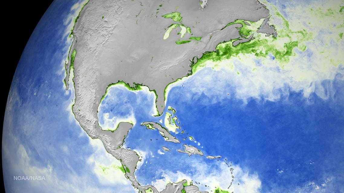This National Oceanic and Atmospheric Administration(NOAA) handout satellite image shows the average global phytoplankton concentration for the month of May 2015