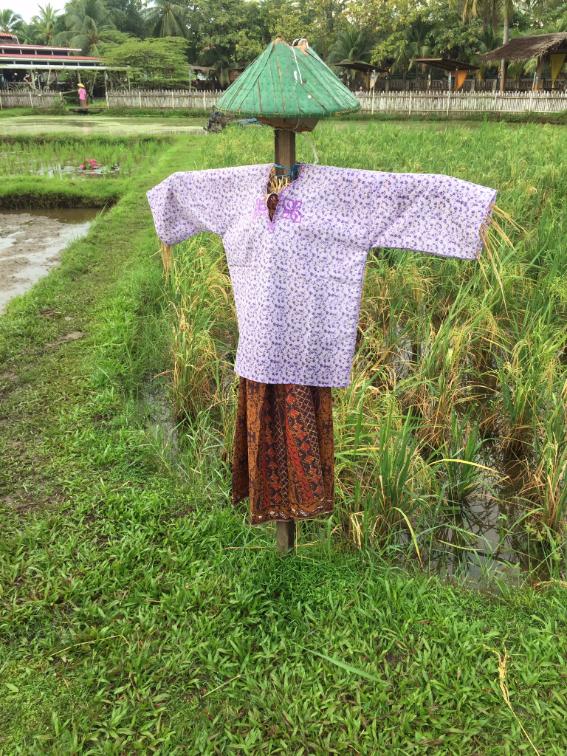 خيال المآتة الماليزي يهش الطيور عن المحصول