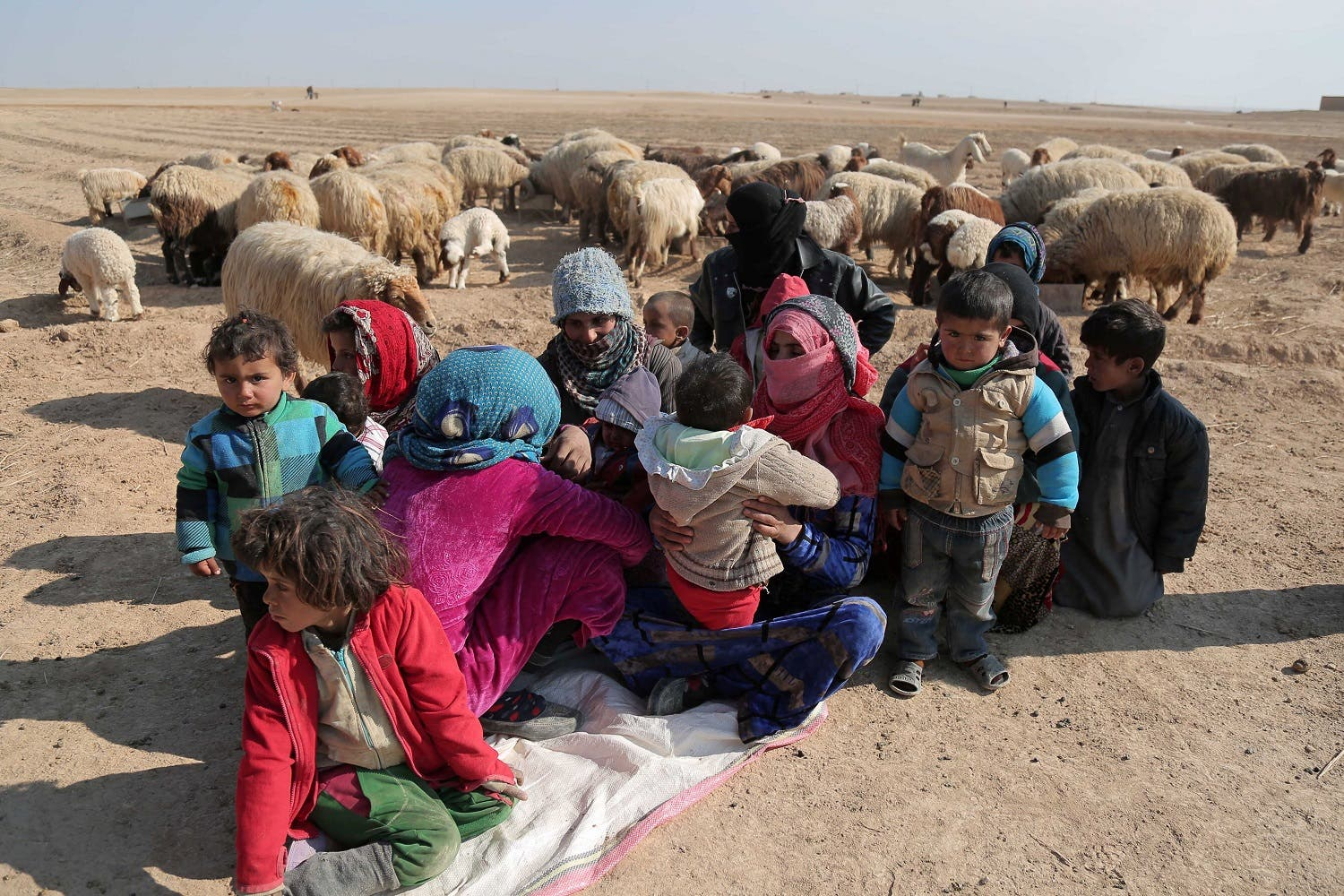 Internally displaced Syrians who fled Raqqa city rest near sheep in northern Raqqa province, Syria February 6, 2017. REUTERS