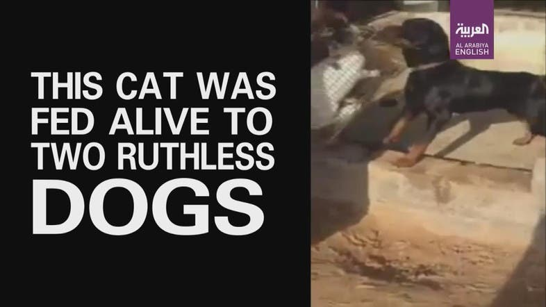 Shocking video shows man feeding helpless cat to his dogs - Al