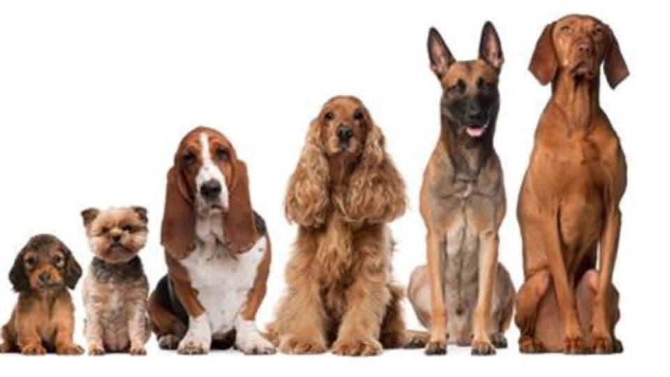 نتيجة بحث الصور عن الكلاب
