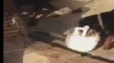 دبي.. القبض على صاحب فيديو الكلاب التي تنهش قطة